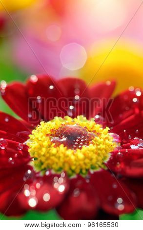 Closeup of red flower with waterdrops