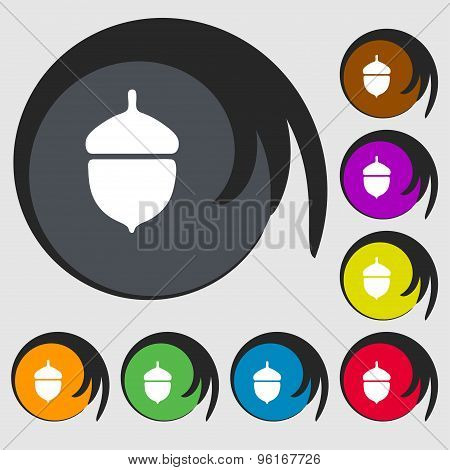 Acorn Icon Sign. Symbol On Eight Colored Buttons. Vector