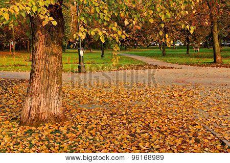 City Square In Golden Autumn Foliage
