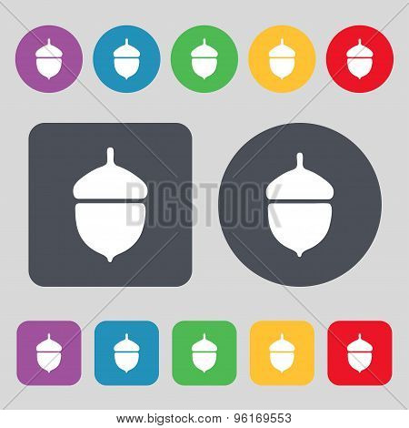 Acorn Icon Sign. A Set Of 12 Colored Buttons. Flat Design. Vector