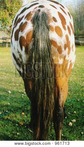Horses Patuty