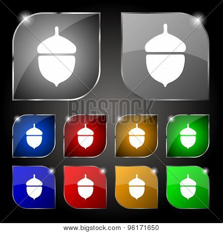 Acorn Icon Sign. Set Of Ten Colorful Buttons With Glare. Vector