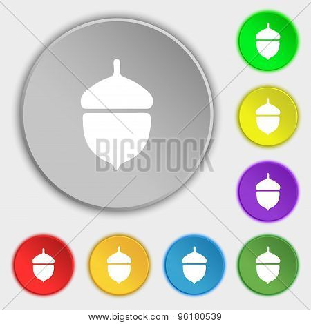 Acorn Icon Sign. Symbol On Five Flat Buttons. Vector