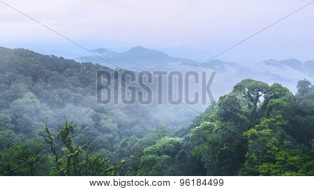 Green Forest And Beautiful Mountain At Inthanon Chiangmai Thaila