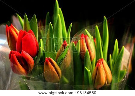 Bunches Of Tulips Wrapped In Clear Paper