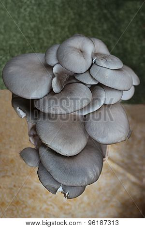 Group Of Editable Mushrooms