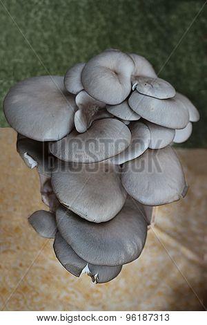 Group Of Editable Mushrooms