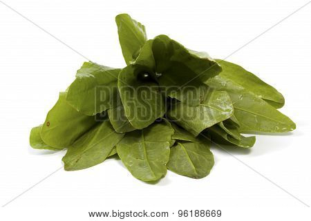 A Beam Of Washed Sorrel
