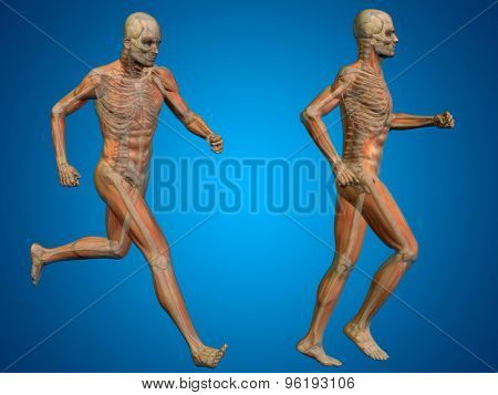 Conceptual 3D human man or male skeleton anatomy transparent body on blue gradient background