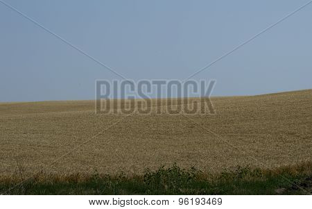 Corner Of A Wheat Field In The Summer