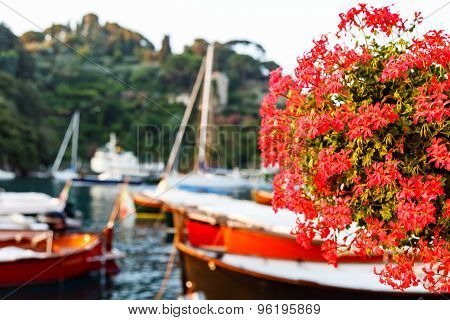Red Geraniums At Portofino Harbor