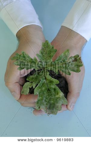Small tree in hands