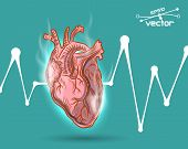 stock photo of beating-heart  - Human heart beat - JPG