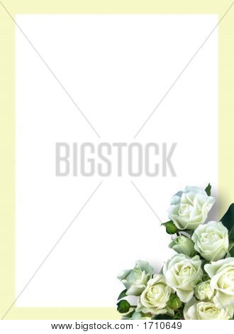 White Roses With Ivory Border
