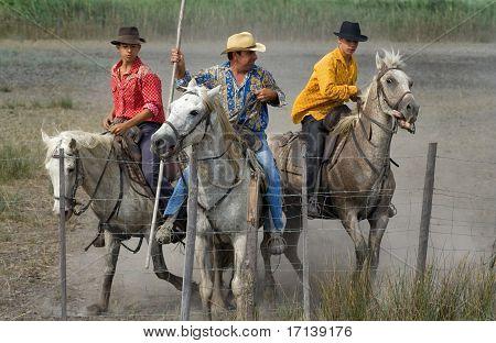 Camargue Cowboys After Bull Racing