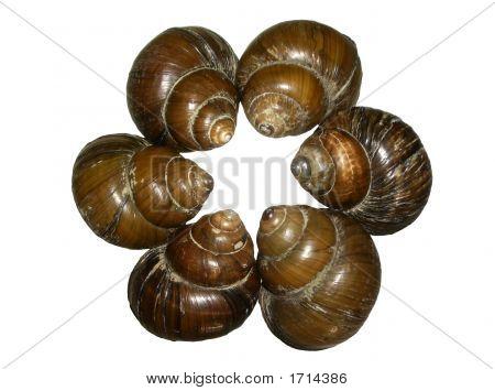 Lake Conch Shells: Teamwork