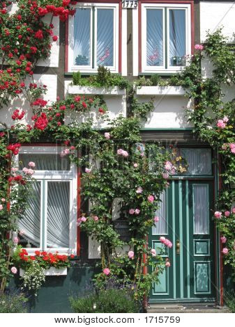 House With Rambler Rose