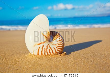 Beautiful Sea Shell on Tropical Beach