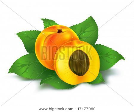 Fresh apricot juicy fruit with cut vector illustration isolated over white background