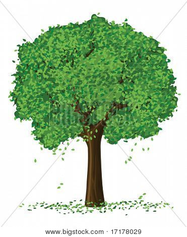 vector silhouette of summer season tree isolated on the white background