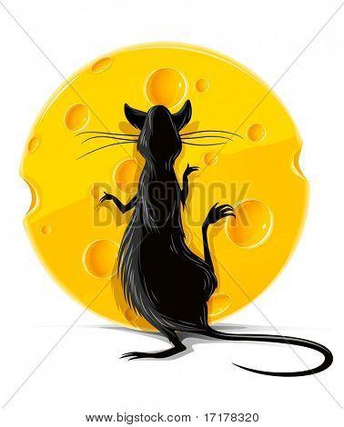 rata negra comer queso amarillo aislado en ilustración de vector blanco