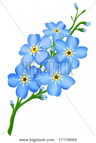 branch of blue forget-me-not flowers isolated - vector illustration