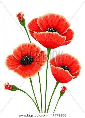 rote Mohn Blumen - Vektor-illustration