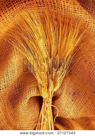 Wheat bouquet over canvas fabric, studio shot, fruitful harvest concept