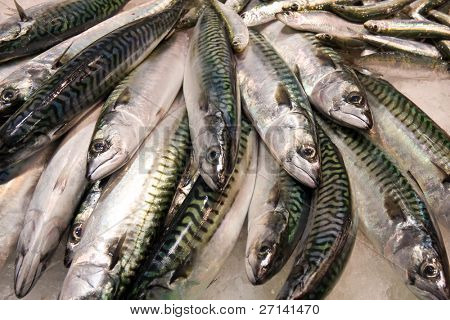fresh fish on the market