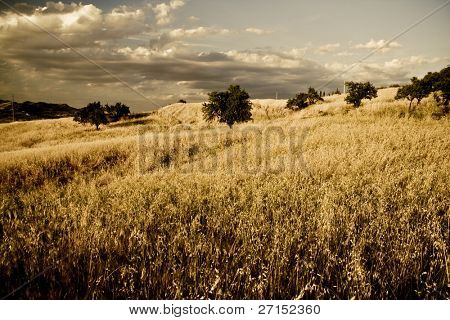 sicilian landscape in the summertime