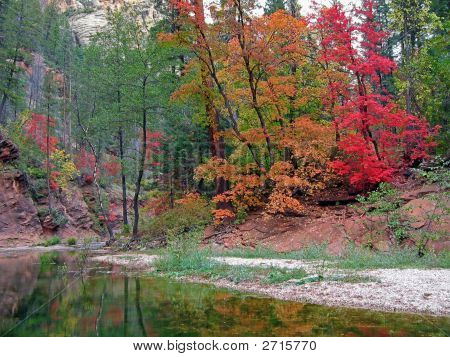 Fall Colors In West Fork Of Oak Creek, Arizona