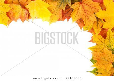 Beautiful yellow leaves isolated on white background
