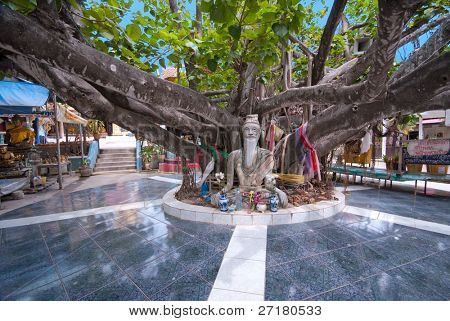 Huge tree in Wat Phra Yai temple, Koh Samui island, Thailand