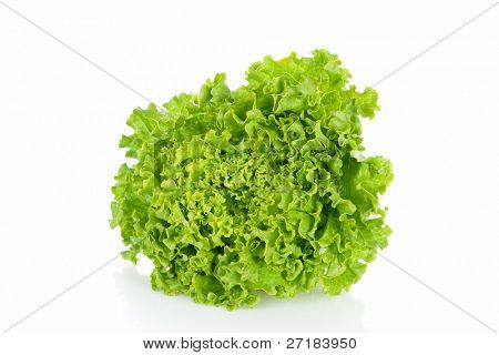 Ripe lettuce isolated in a white background