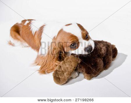 Cute dog chewing on stuffed animal
