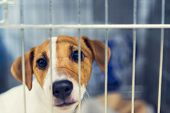 Sad Dog Behind The Fence. Homeless Dog Behind Bars In An Animal Shelter poster