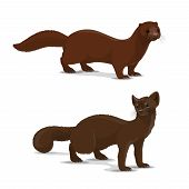 Mink And Sable Dark-colored Carnivorous Mammal Icon. Wildlife Vector Animal With Rich Glossy Brown C poster