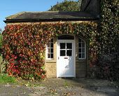 stock photo of english ivy  - Quaint house covered in Ivy with old door and windows - JPG