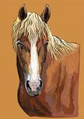 Colorful Hand Drawing Portrait Of Russian Heavy Draft Horse. Horse Head  In Profile Isolated Vector  poster