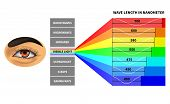 Visible Light Spectrum. Color Waves Length Perceived By Human Eye. Rainbow Electromagnetic Waves. Ed poster