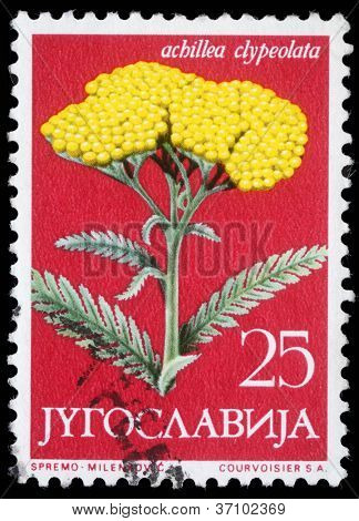 YUGOSLAVIA - CIRCA 1958: A stamp printed in Yugoslavia shows Moonshine Yarrow, series, circa 1958