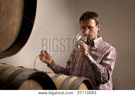 Wine producer smelling white wine in glass while wine tasting it in wine cellar.