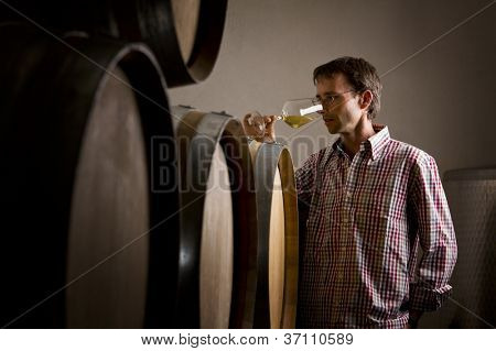 Wine producer smelling a sample of white wine in glass while wine tasting it in cellar.