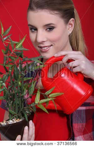 Woman watering bonsai