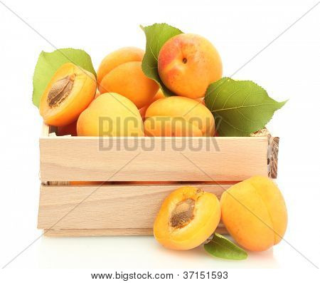 ripe apricots with green leaves in wooden box isolated on white
