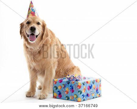 Dog with Birthday present