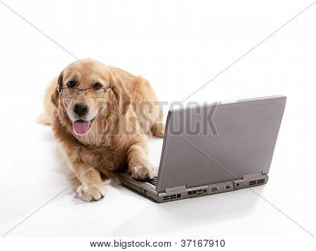 Laptop Golden Retriever
