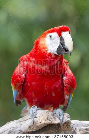 macaw bird on a branch