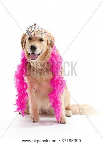 princess golden retriever