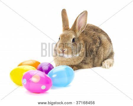 rabbit looking on eggs